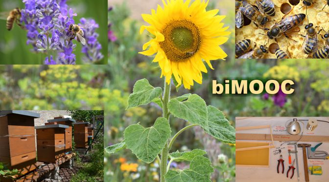 Bienen & Imkerei MOOC – Projekt