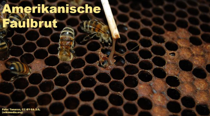 Sperrbezirk in Bernsdorf wegen Amerikanischer Faulbrut