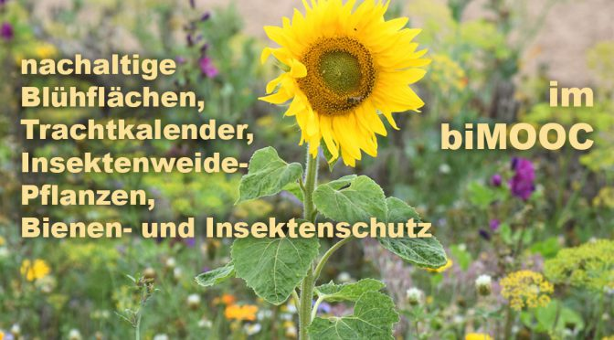 Blühflächen, Trachtkalender, Bienenweidepflanzen,