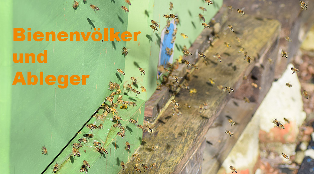 Bienenvölker & Ableger